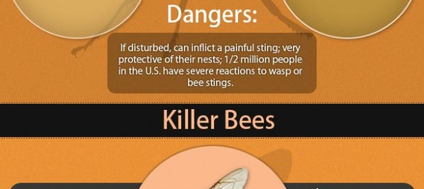 info graphics for numerous Stingers